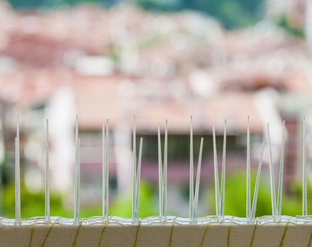 lutte contre les pigeons avec des pics - Algora environnement